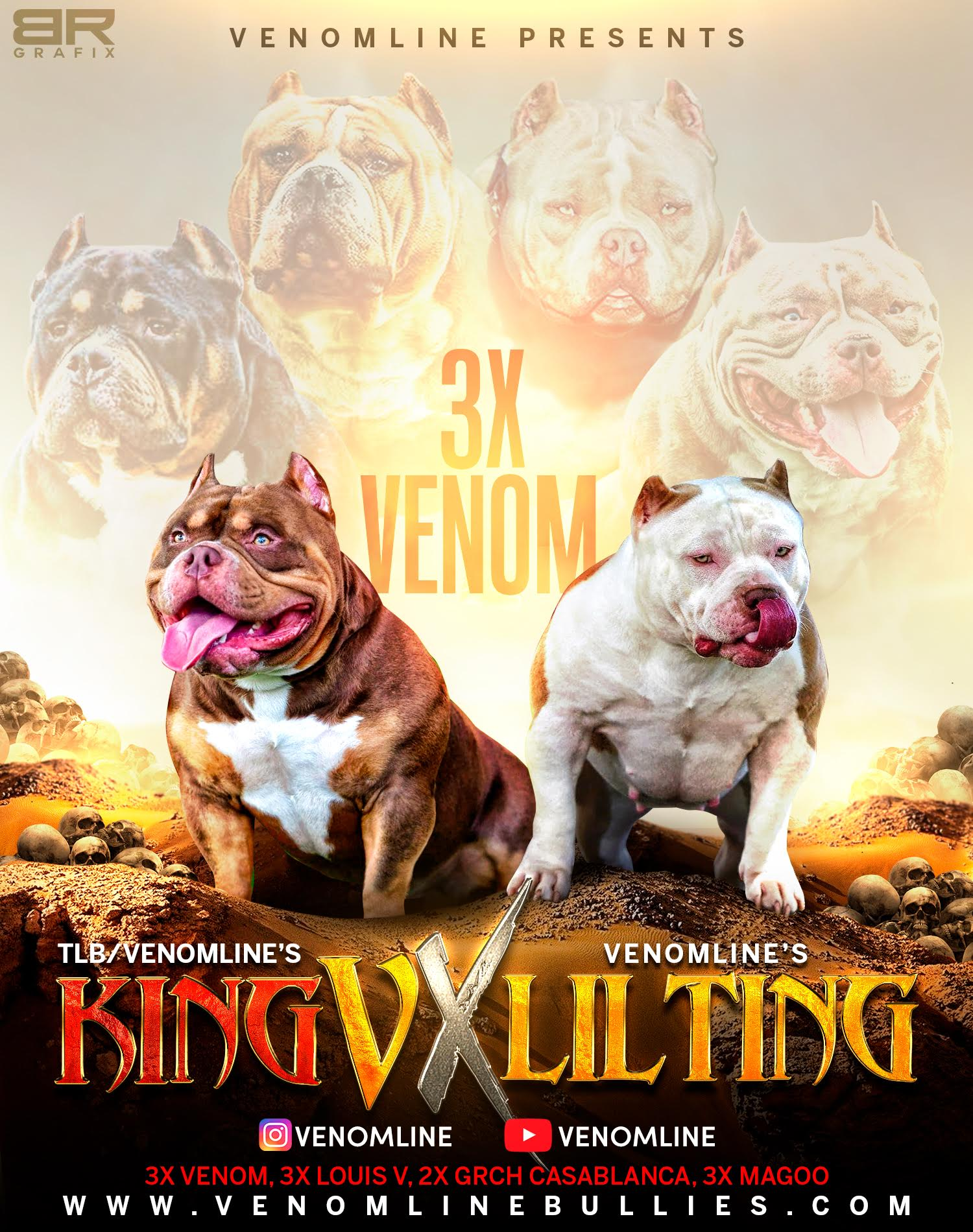 Top American Bully Bloodlines, Best Breeders, Top Kennels, Venomline Pocket Bully, Tri Color Puppies for sale