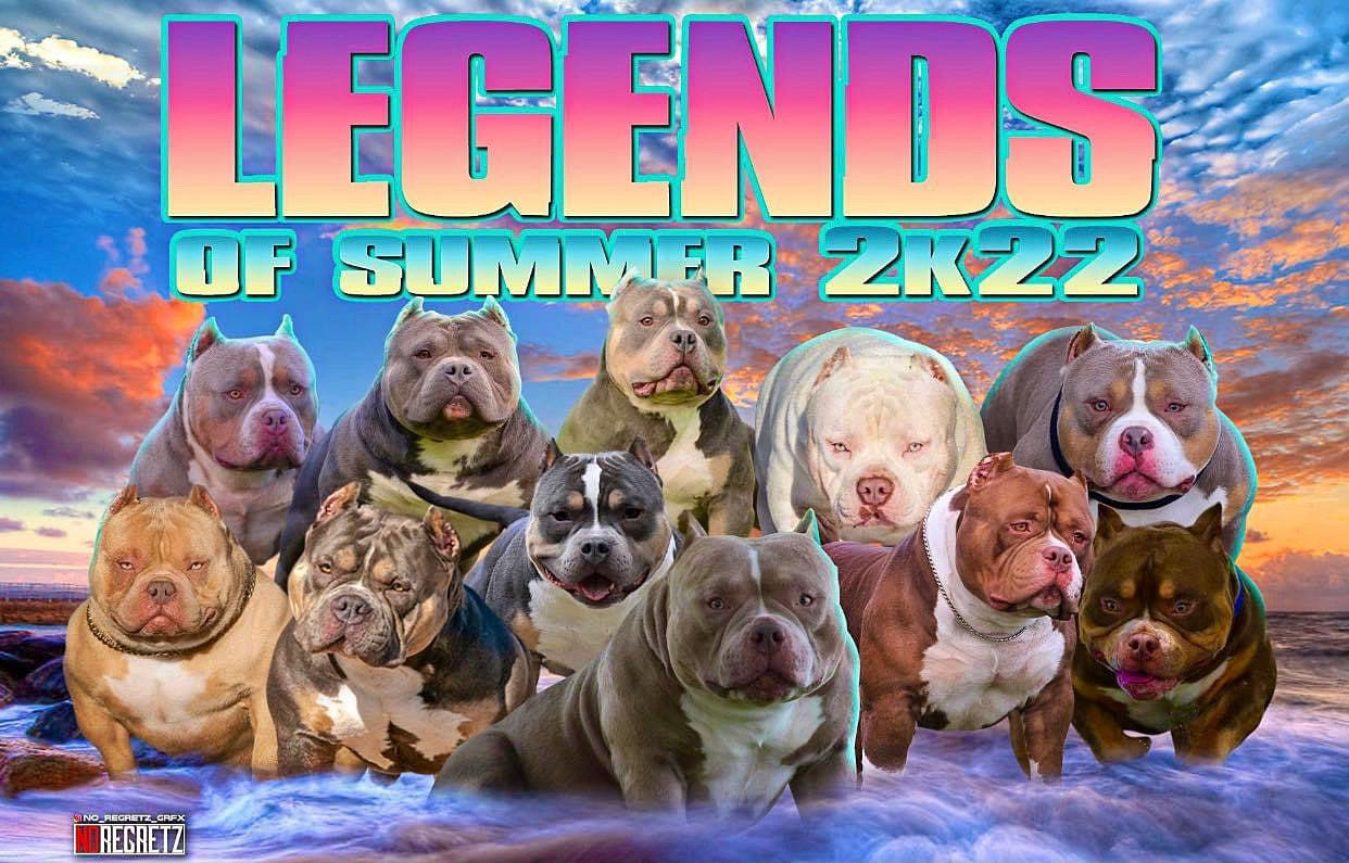 Pocket American Bully Puppies for Sale,  Extreme Pocket Bully, Venomline, American Bully Kennels, Best Pocket Bully Kennels, Pocket Bully Breeders, Pocket Bully Kennels, Top American Bully Breeders, Best Bully Bloodline