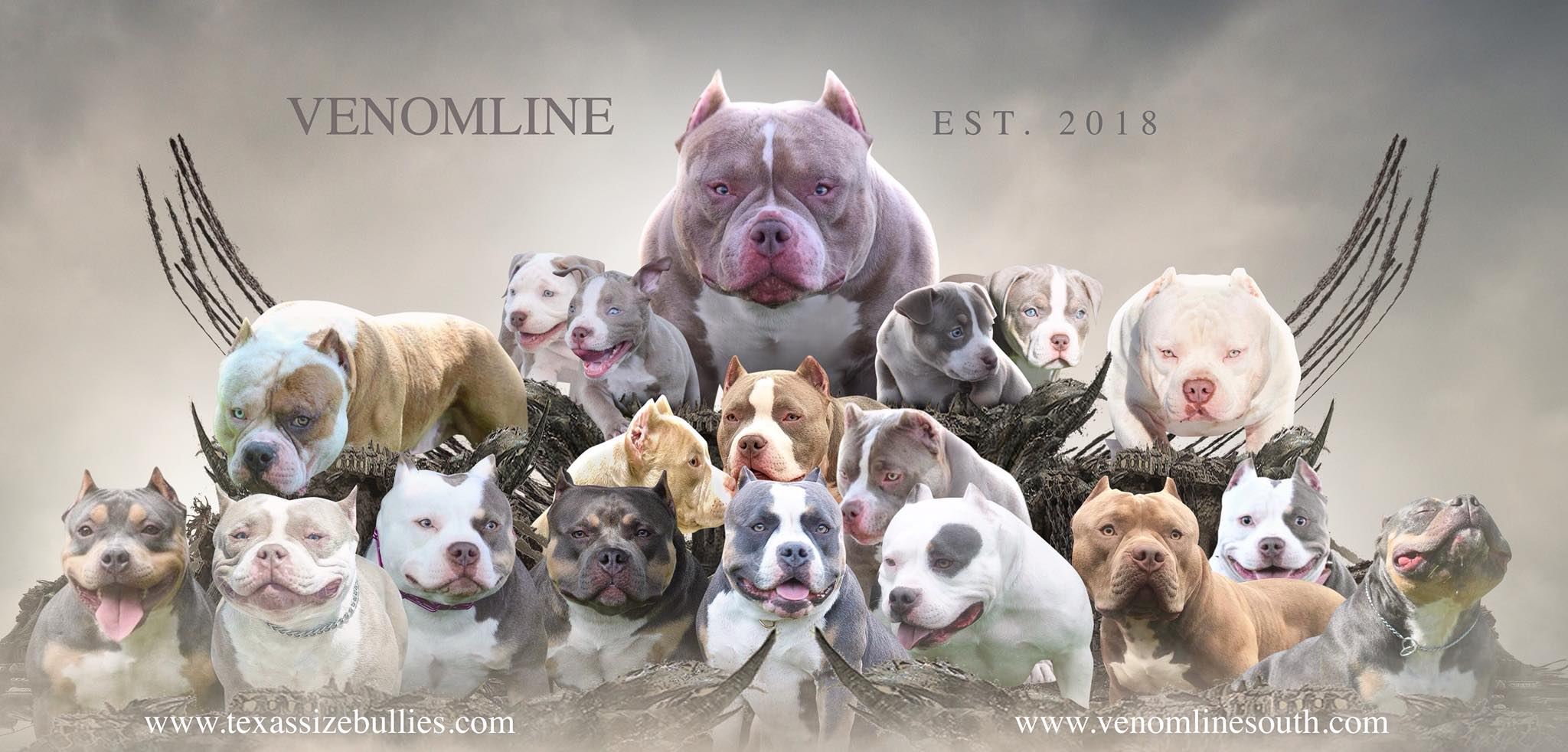 CHOOSING A STUD: SHOW DOGS & STUD DOGS IN THE AMERICAN BULLY BREED