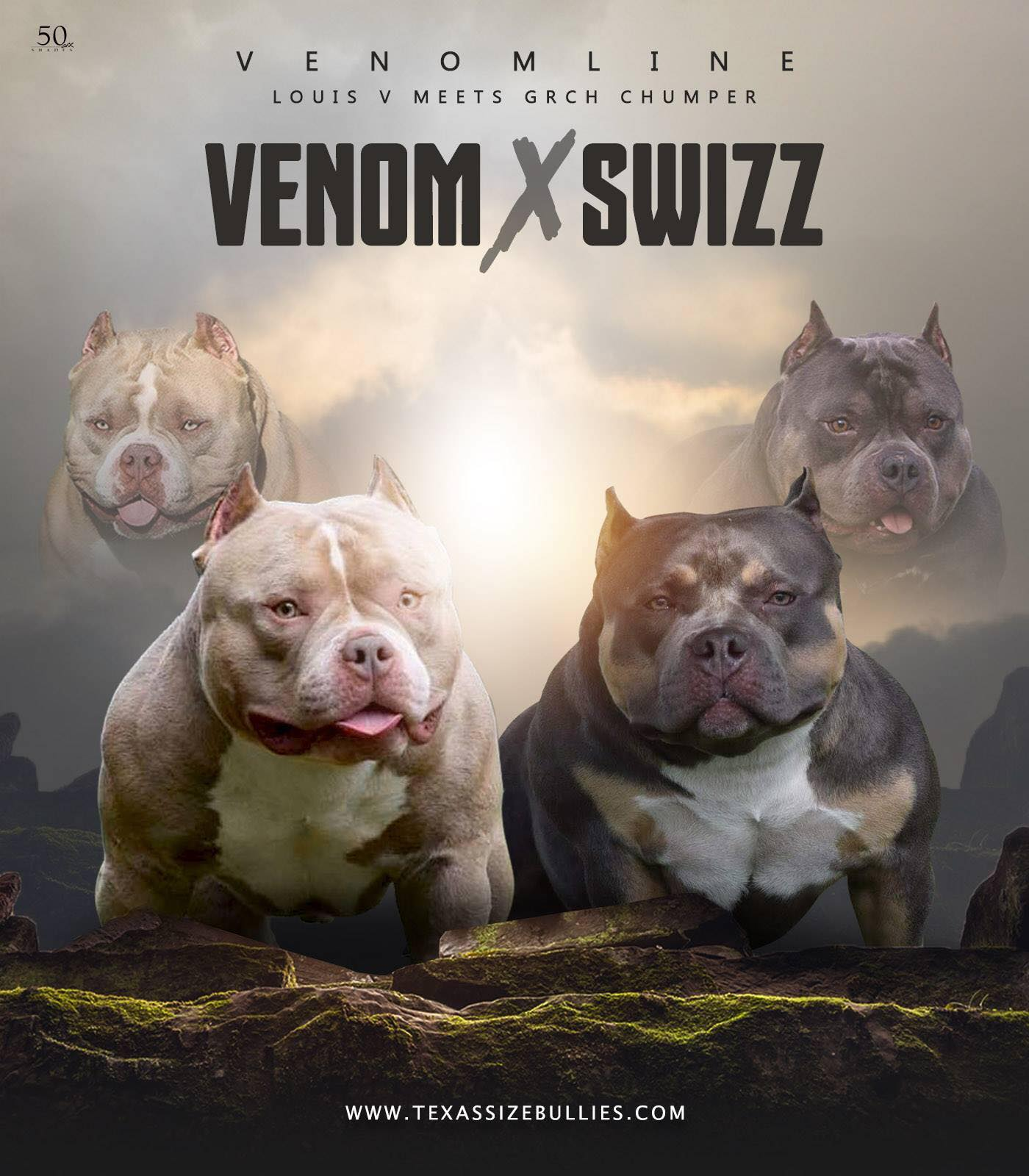 Best Extreme Build Pocket Bully Puppies For Sale | Venomline