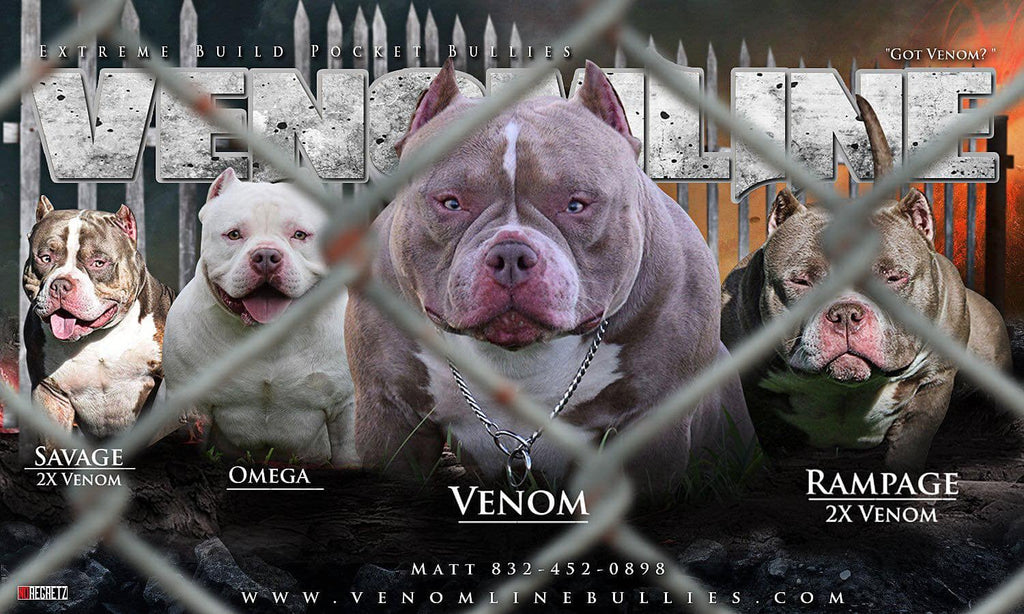 VENOMLINE | EXTREME BUILD POCKET AMERICAN BULLY'S