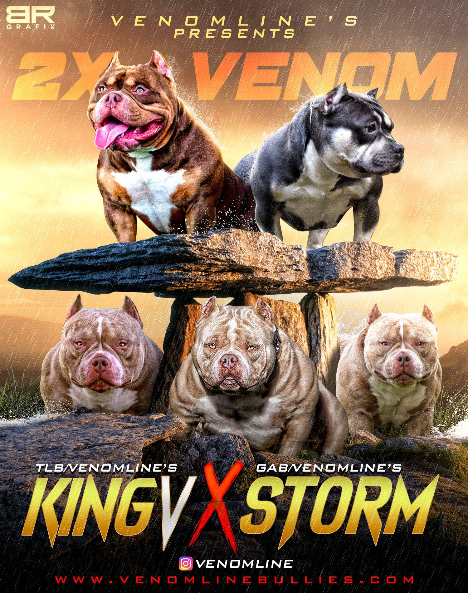 american bully puppies, puppies for sale, venomline, pocket bully, micro bully, exotic bully, extreme bully, puppies for sale