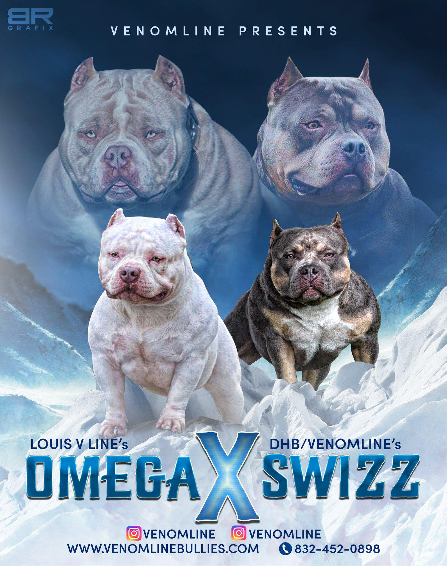 Champion American Bully, Best American Bully Breeders, American Bully Kennels in Florida, Top American Bully Kennels, Best Pocket American Bully Breeders, ABKC Champions, American Bully Pocket, Pocket American Bully Puppies For Sale, Venomline