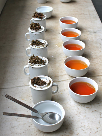 A row of black tea for cupping