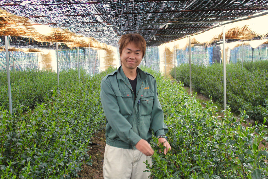 Man standing in rows of tea plants
