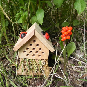 Apples to Pears 101219 Make Your Own Insect House Set In A