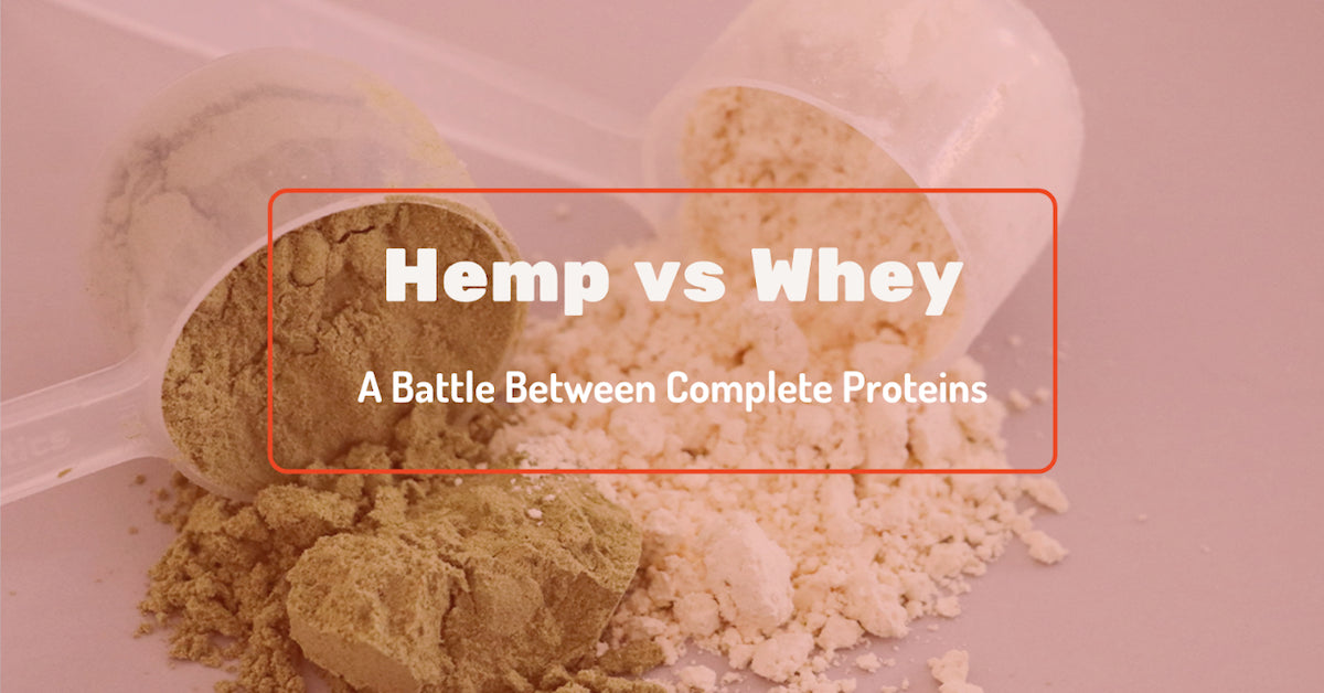 A scoop of hemp protein next to a scoop of whey protein
