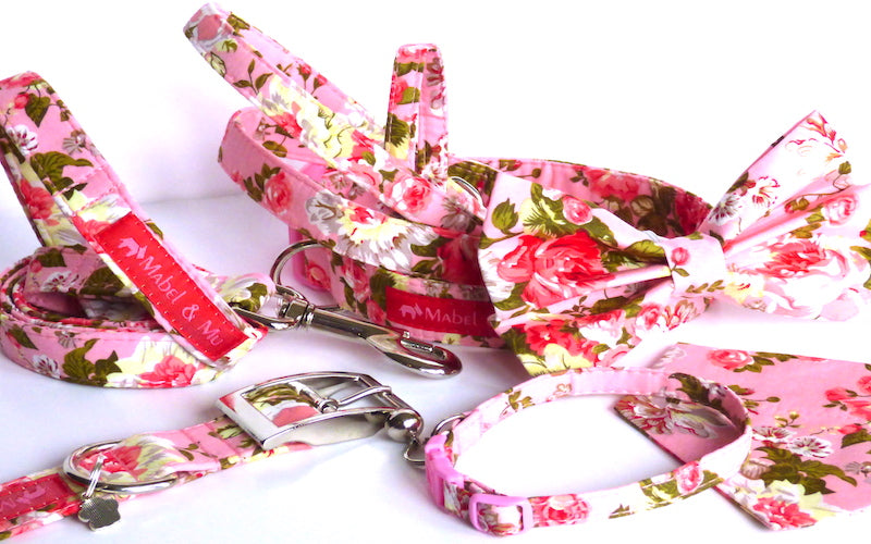 "Designer Dog & Cat Collar Colletion ""Carnation"""