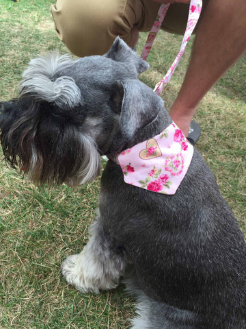 "Mabel & Mu ""Sweetheart"" Dog Lead and Bandana"