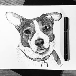 Jake Ditchfield - Pet portraits