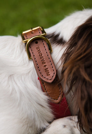 Dog Collar - Leather with Red webbing