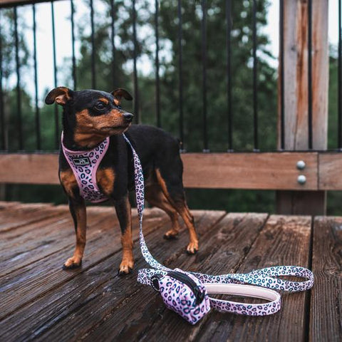 Pink Leopard Print Dog Leash