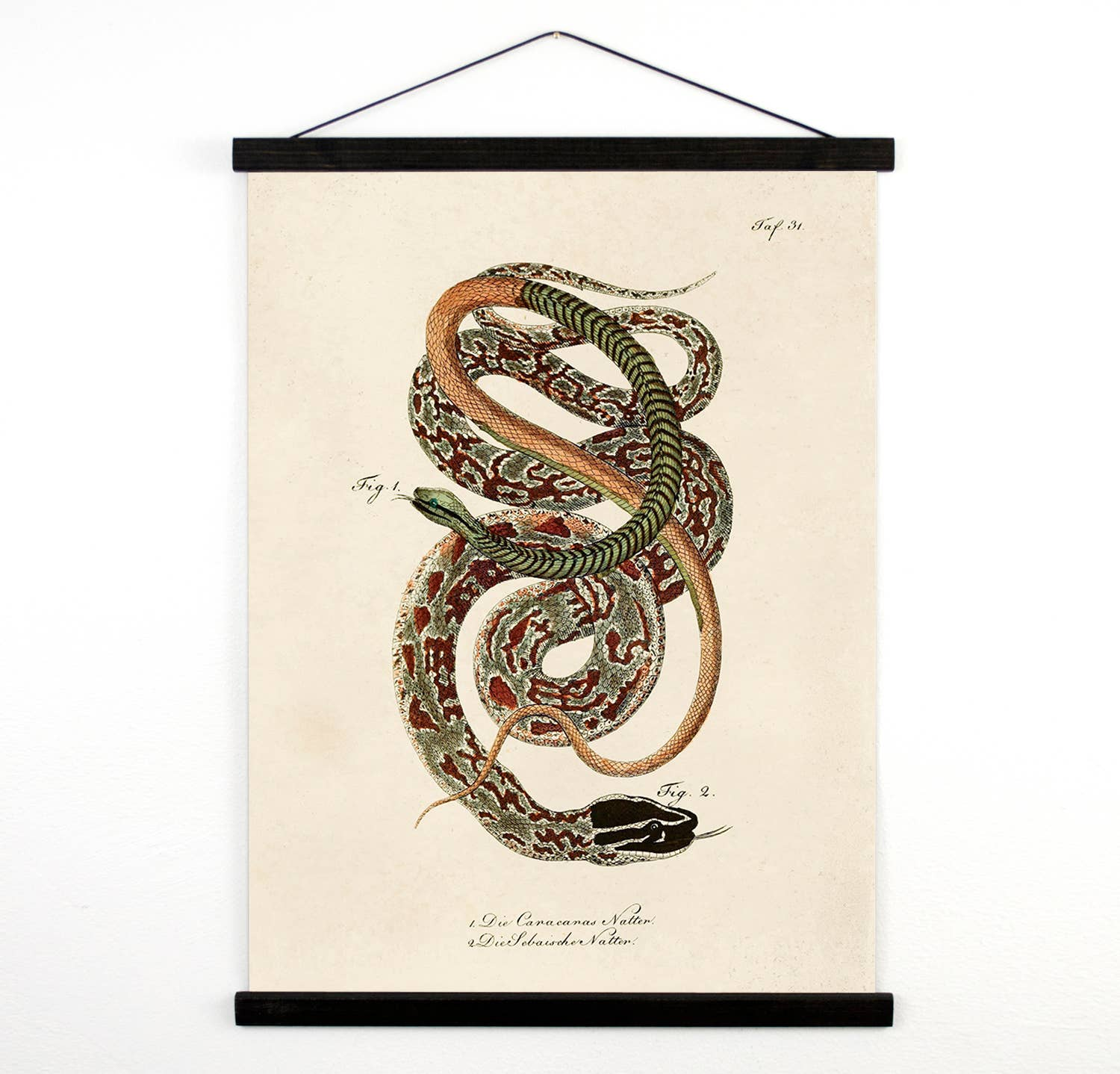 Vintage Natural History French Snake Canvas Hanging Chart