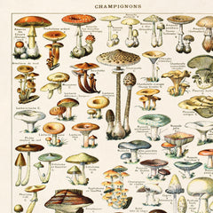 Vintage Botanical French Mushroom Diagram Print
