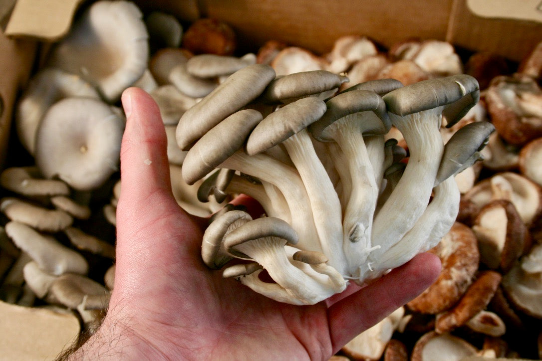 Organic Mushrooms - Oyster and Shiitake