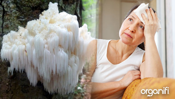 The Benefits Of Lion's Mane Mushroom