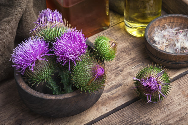 30 Milk Thistle Benefits Backed by Research