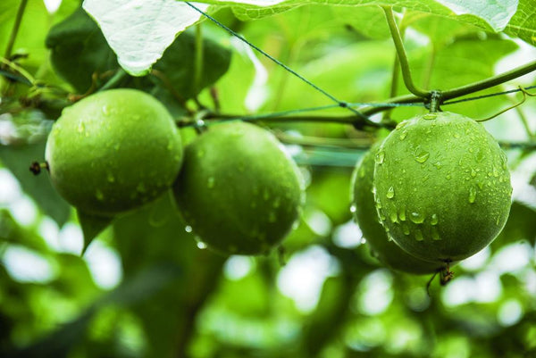 Is Monk Fruit A Healthy Sweetener?