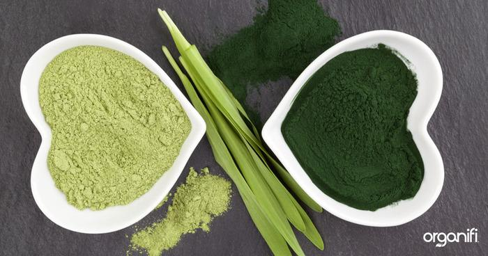 Why Plant Based Protein Powder Is Better For You
