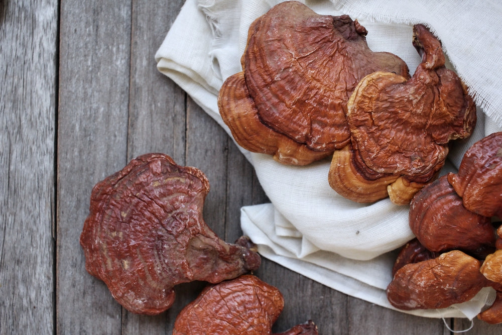 6 Reasons Why Red Reishi Is The King Of Mushrooms