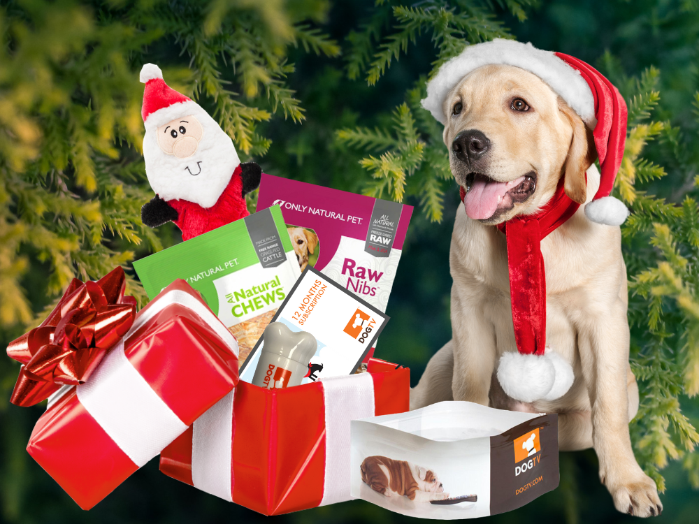 DOGTV's Canine Enrichment Holiday Box
