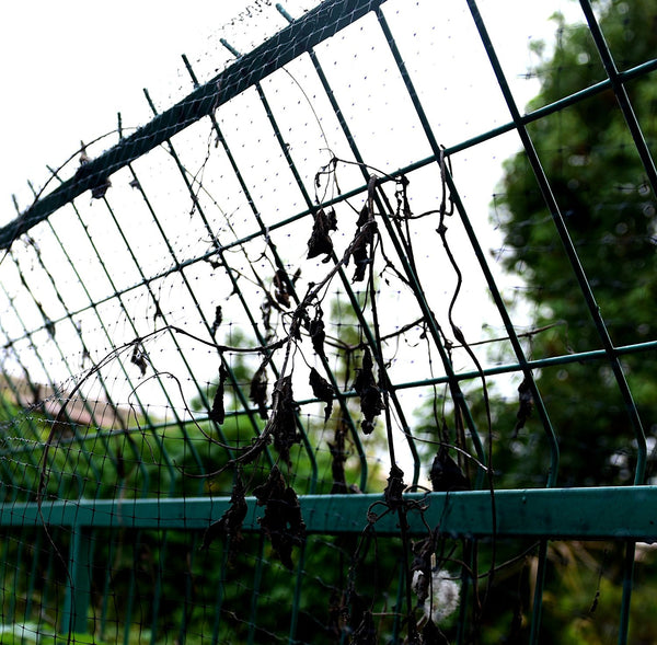 Planted Perfect Garden Bird Netting - Planted Perfect