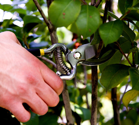 "Planted Perfect 8"" Forged Steel Power Pruning Shears - Planted Perfect"