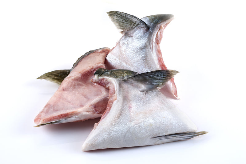 TGIF! Let's check out our Hamachi Yellowtail Collar!