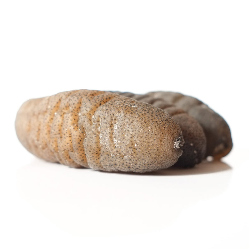 PREMIUM SEA CUCUMBER - 500GM