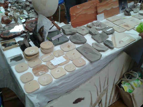 Fossils on display at Bakewell Fossil Show