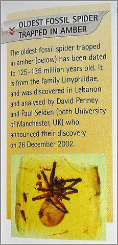 oldest fossil spider guinness book of records