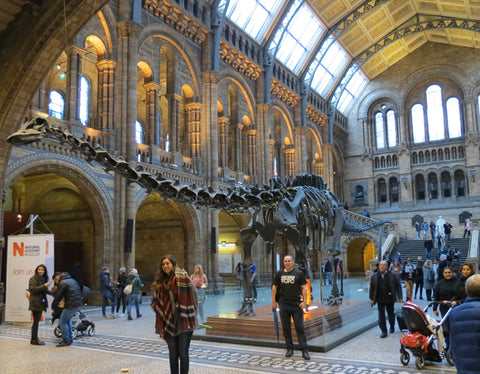 Dippy at the Natural History Museum London