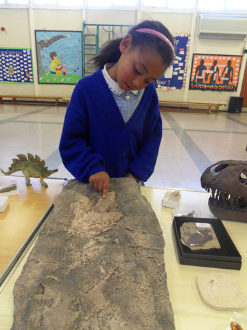 trace fossils school outreach