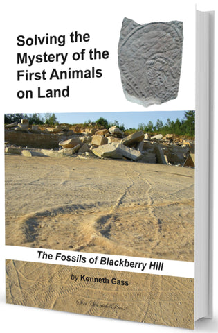 The fossils of blackberry hill