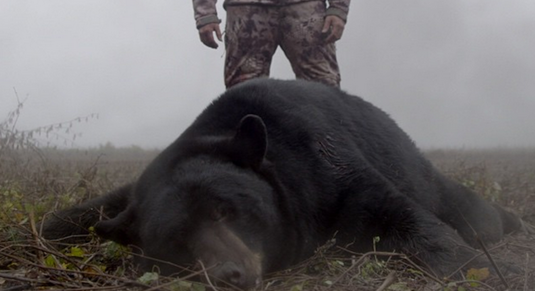 Bear Hunting Tips from NOMAD