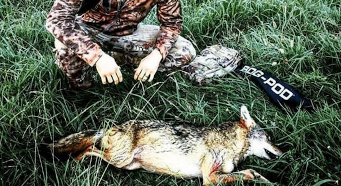 Coyote Hunting 101: Tips, Tricks, and Information from NOMAD