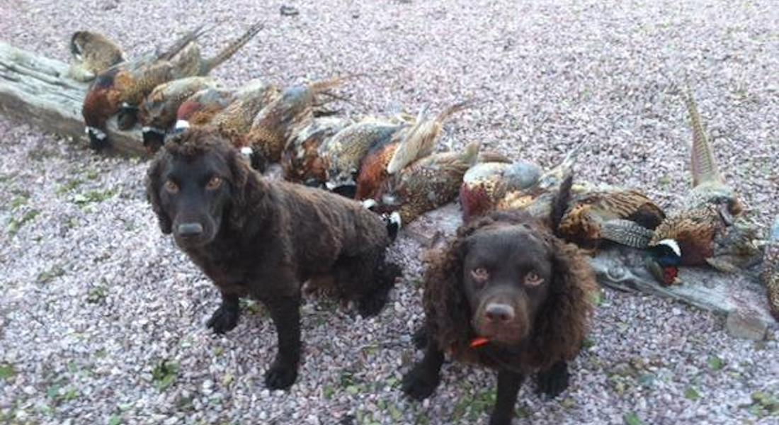 Training a Dog for Duck Hunting