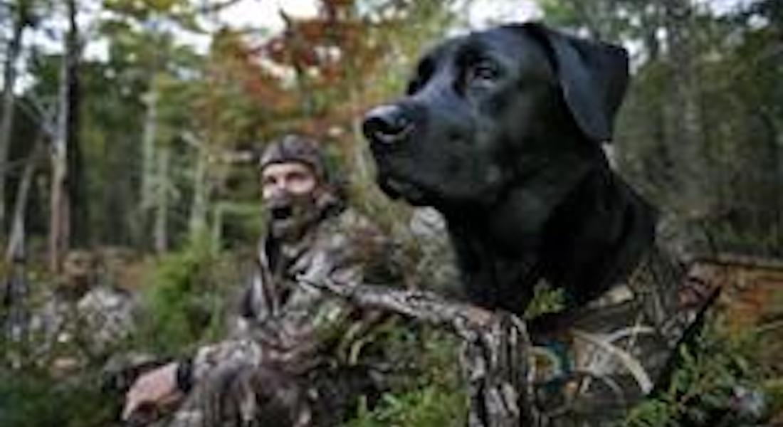 Best Dogs for Duck and Waterfowl Hunting