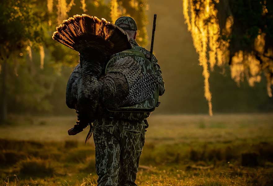 hunter carrying decoy turkey into woods