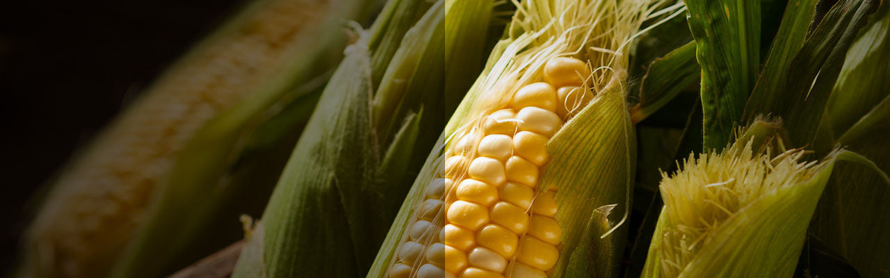 non gmo project verified corn labels