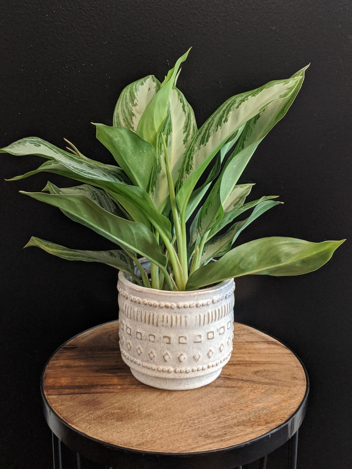 Aglaonema Mix - 4in