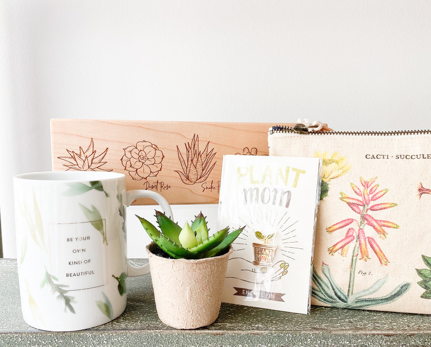 Succulent Gift Set (no. 12)