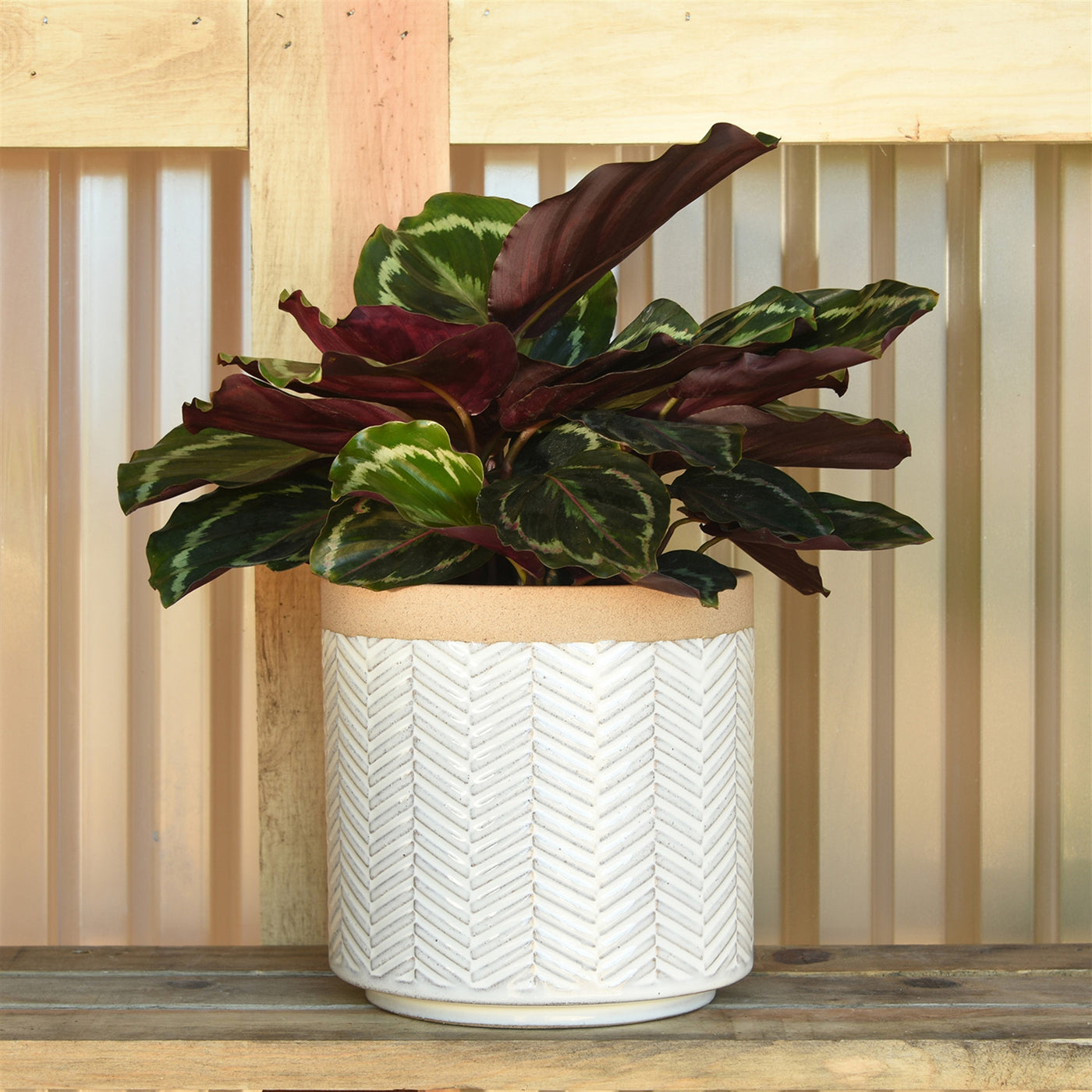 Ramos Banded Chevron Pot - 6""
