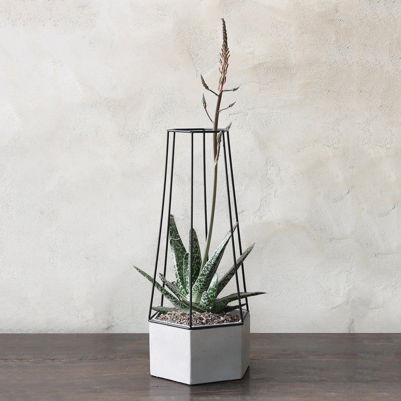 Large Indio Cement Planter