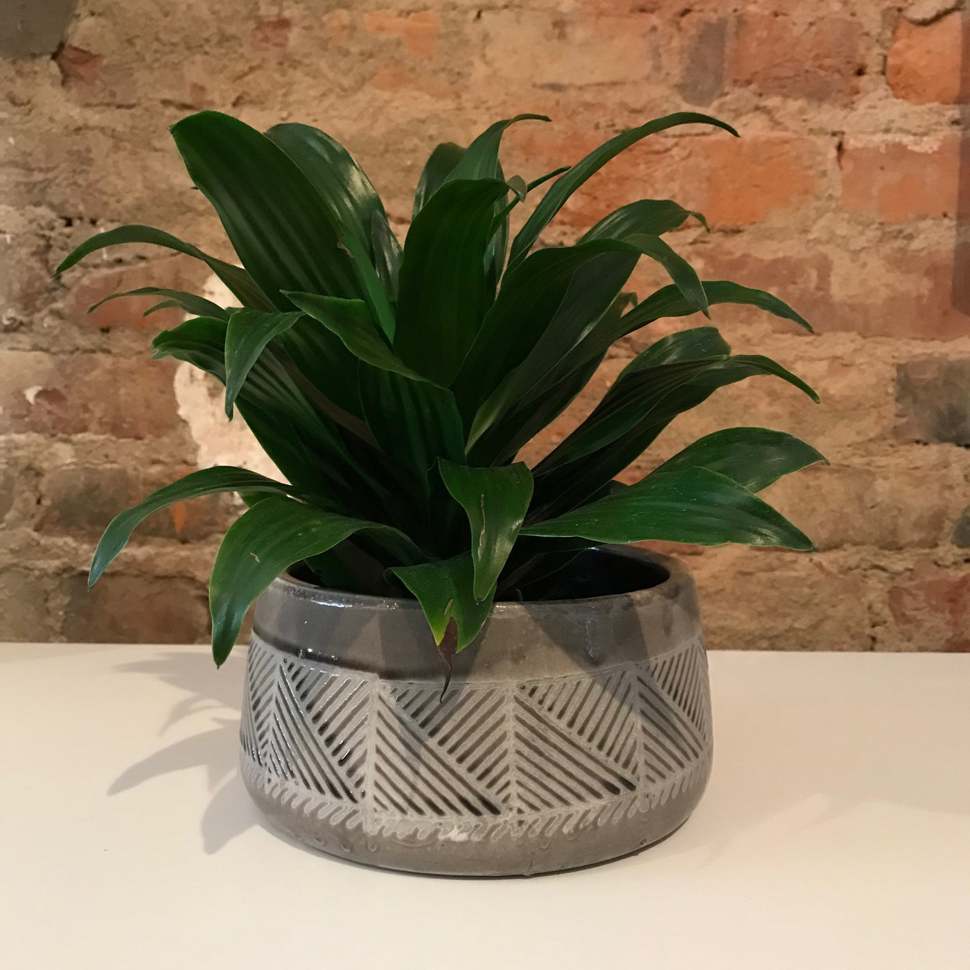 Short Round Patterned Pot