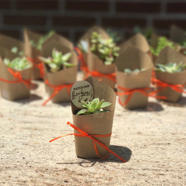 Wooden Plant Tag (Set)