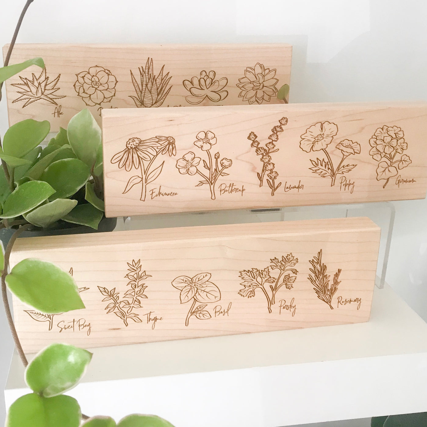 Illustrative Plant Plaques