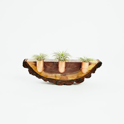 Walnut Pipe Air Planter