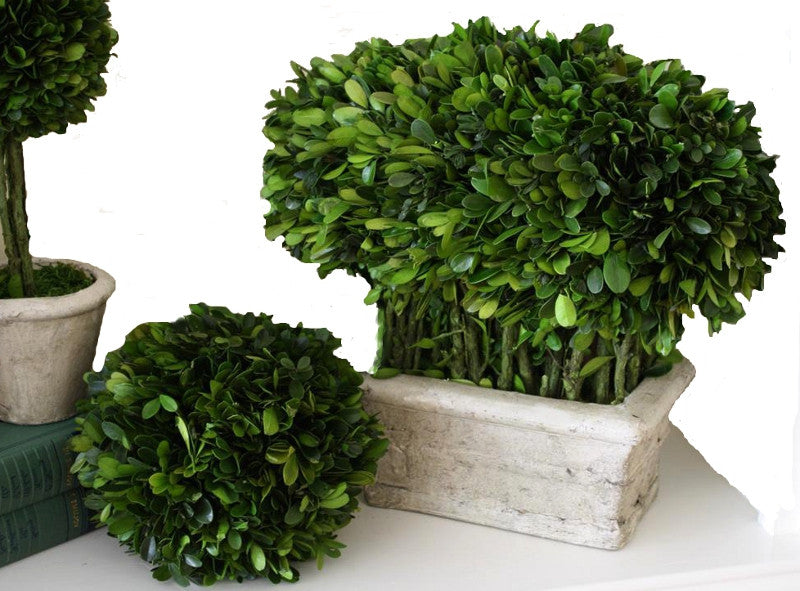 Preserved Boxwood Accents