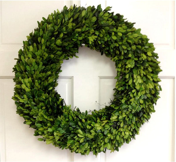 "Preserved 20"" Boxwood wreath"